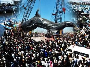 Whale shark karachi, Pakistan