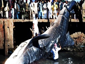 People gathered to see the whale shark at karachi Pakistan